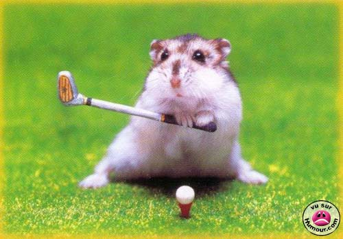 Hamsters, Jerbos y Conejos [Imagenes]